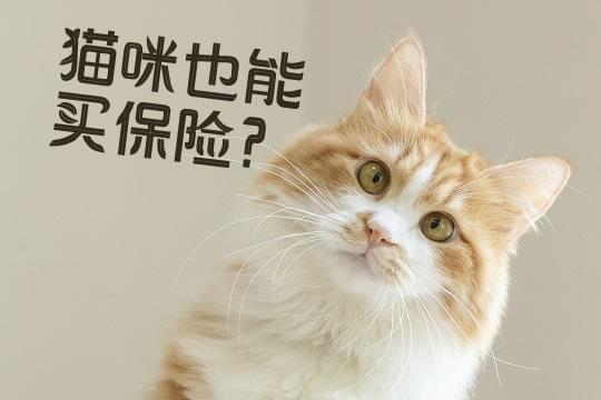 宠物猫可以买保险吗?宠物保险一年多少钱?宠物医疗险值得买吗?
