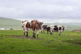 想要发展农业、养殖业,保险该如何配置?