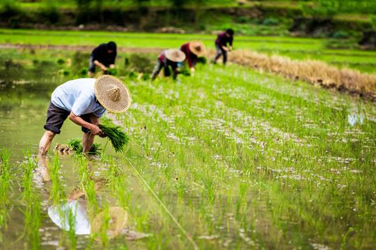 农民补贴除了养老保险,还有这些!