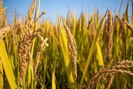发展农业、养殖业,保险如何配置?