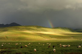 畜牧业也有保险?
