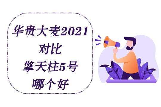 华贵大麦2021怎么样?对比擎天柱5号定期寿险哪个好?