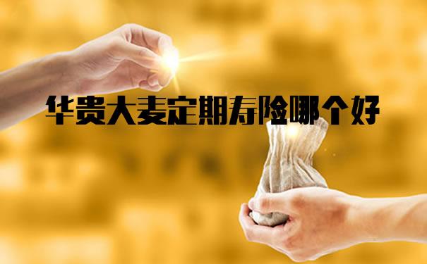 华贵大麦定期寿险哪个好?是哪个保险公司?值得买吗?