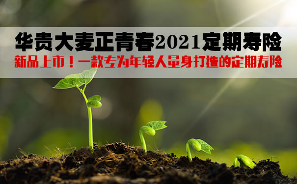华贵大麦正青春2021定期寿险怎么样?好不好?条款解析+优势