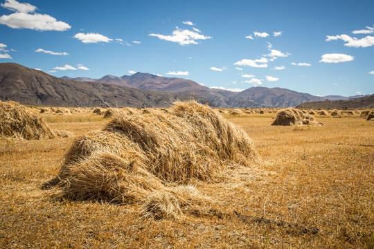 农作物受灾如何申请理赔?