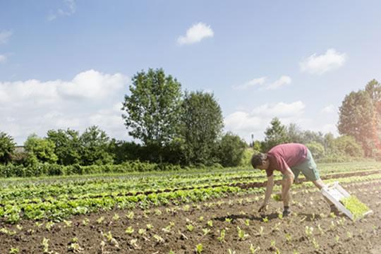老人发展农业、养殖业,保险如何配置?